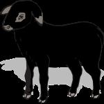 sheep-307568_1280